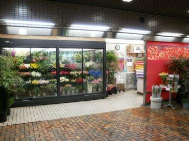 花のモナミ